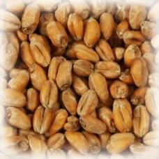 Солод пшеничный Chateau Munich Wheat (1 кг)