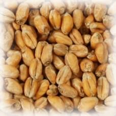 Солод пшеничный Wheat VIKING MALT (1 кг)